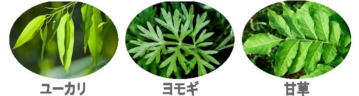 ユーカリ・ヨモギ・甘草